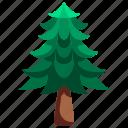 botanical, garden, gardening, pine, tree, yard icon