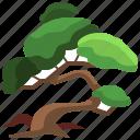 bonsai, botanical, garden, gardening, tree, yard icon