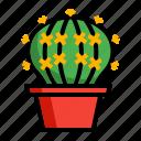 cactaceae, cactus, grusonii, plant, pot icon