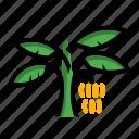 banana, fruit, plant, tree icon