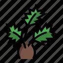 arecaceae, palm, pot, tree, windmill icon