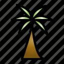 palm, plant, nature, leaf, coconut