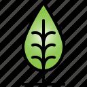 tree, garden, wood, nature, leaf, plant