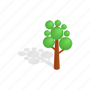 forest, isometric, nature, plant, shadow, tree