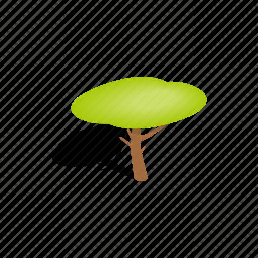 crown, isometric, leaf, nature, plant, shadow, tree icon