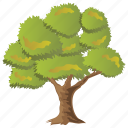 chestnut oak, chestnuts, deciduous tree, shrubs, spreading trees icon