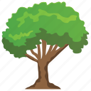 buckthorn tree, columnar, fast growing, forest, tall hedge icon