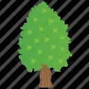 agriculture, broad leaves tree, cedar tree, cedar wood, forest tree icon