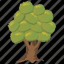 aesculus hippocastanum, ecology, evergreen tree, horse chestnut tree, tree icon