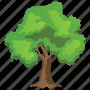hardwood tree, hornbeam, ironwood, musclewood, spreading trees icon