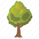 elm tree, forestry, semi deciduous tree, ulmus tree, woods icon