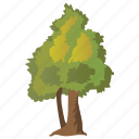 decorative tree, grafting, hemlock tree, planting, small tree icon