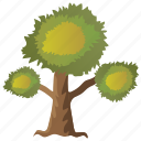 deciduous, eucalyptus tree, forestry, photosynthesis, trees icon
