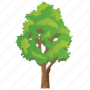 deciduous, elm tree, flowering plant, forestry, semi-deciduous icon