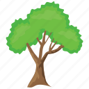 firewood, forest fire, greenery, shade tree, texas ash icon