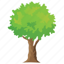 fast growing trees, forestry, shrub, tree, woodland icon