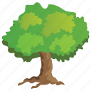 agriculture, ecology, evergreen tree, forestry, hackberry tree icon