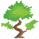 bonsai tree, decorative tree, grafting, small trees, umbrella tree icon