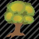 durable tree, furniture wood, oak, sawtooth oak, shrub icon