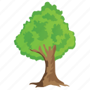 agriculture, bluwood tree, ecology, evergreen tree, forestry icon