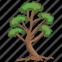 evergreen, forest, hangman's elm tree, nature, tree trunks icon