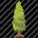 cypress tree, ecology, larch tree, larix tree, nature icon