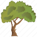 agriculture, ecology, evergreen tree, forestry, paperbark maple tree icon