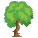 evergreen, forest, mexican sycamore tree, nature, tree trunks icon