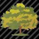 acer saccharum, birch, green oak, oak poplar, sugar maple icon