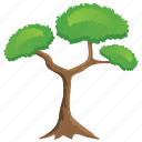 bonsai tree, forest, nature, pitch pine tree, stone pine icon