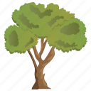 agriculture, ecology, evergreen tree, forestry, linden tree icon