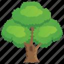 green foliage, hard tree, leafy lushness, shady, sycamore tree icon