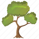black willow tree, deciduous tree, ecology, forestry, photosynthesis icon