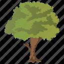 fruit tree, generic tree, spreading tree, sugarberry, woodland icon