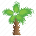 ecology, nature, palm tree, tropical tree, windmill palm icon