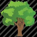 bluewood tree, brazilwood tree, condalia, ecology, nature icon