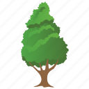 canadian hemlock, eastern hemlock, eastern hemlock-spruce, greenery, nature icon