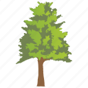 deciduous tree, forestry, genus carya, hickory tree, nature icon