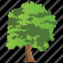 deciduous, elm tree, flowering plant, forestry, semi-deciduous icon