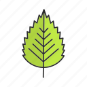 birch, foliage, forest, leaf, nature, park, tree icon