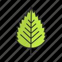 birch, forest, leaf, nature, park, tree, foliage