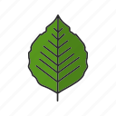 foliage, forest, leaf, nature, park, poplar, tree icon