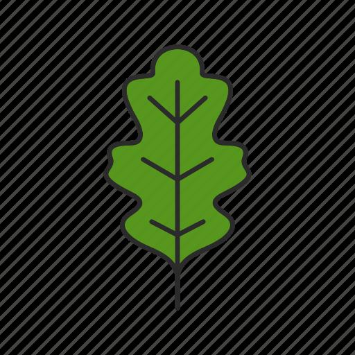 foliage, forest, leaf, nature, oak, oakleaf, tree icon