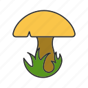 autumn, champignon, food, forest, grass, mushroom, porcini icon