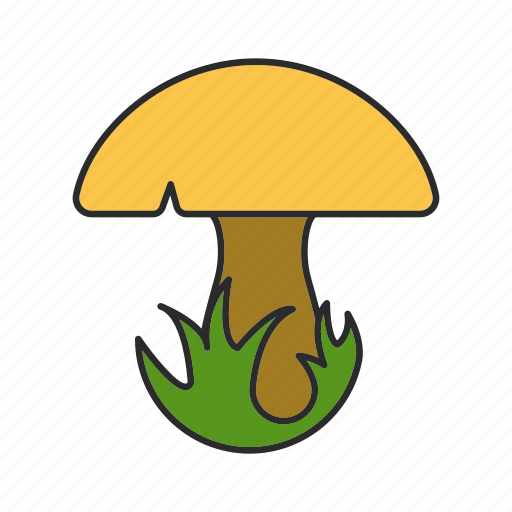 autumn, champignon, food, forest, grass, mushroom, porcini icon