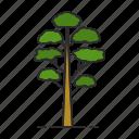 conifer, fir, forest, nature, park, pine, tree