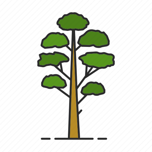 conifer, fir, forest, nature, park, pine, tree icon