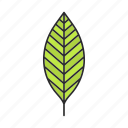 foliage, forest, leaf, park, plant, tree, walnut icon