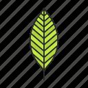 foliage, forest, leaf, park, plant, tree, walnut
