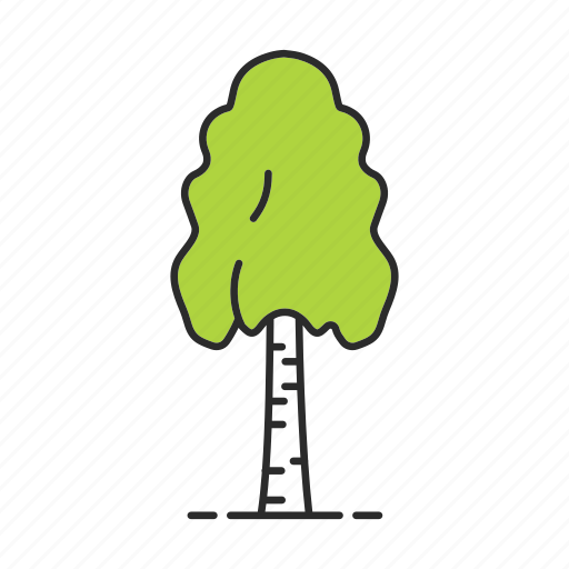 birch, birchtree, forest, nature, park, plant, tree icon